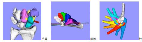 上肢関節のバイオメカニクス